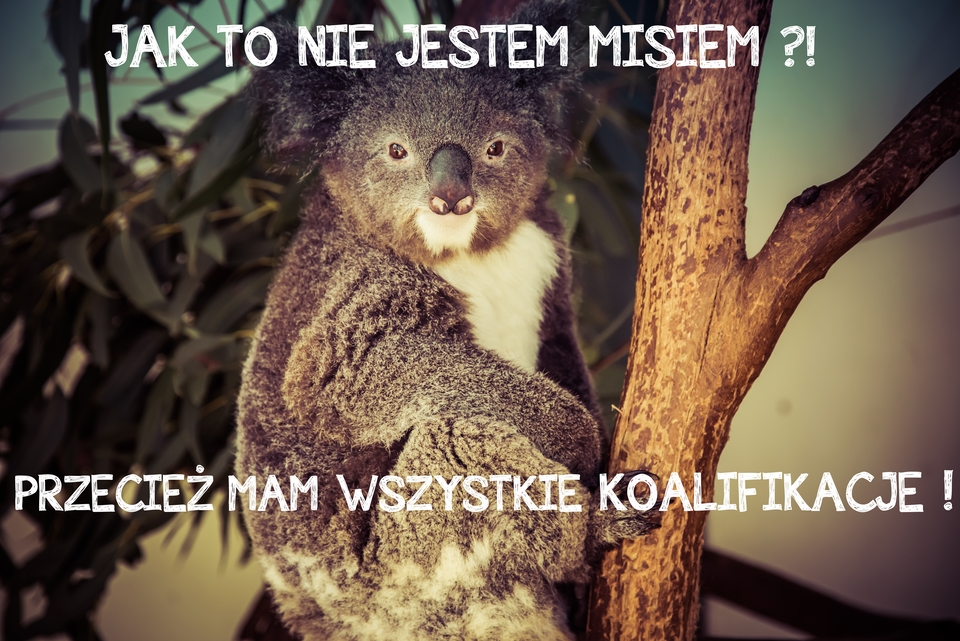 Koala-67241