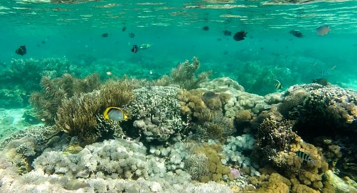 rafa koralowa na Komodo