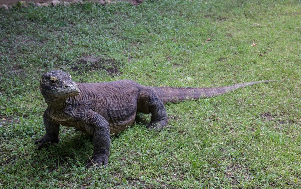 Rejs po Parku Narodowym Komodo