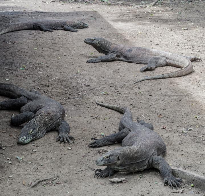 Komodo warany