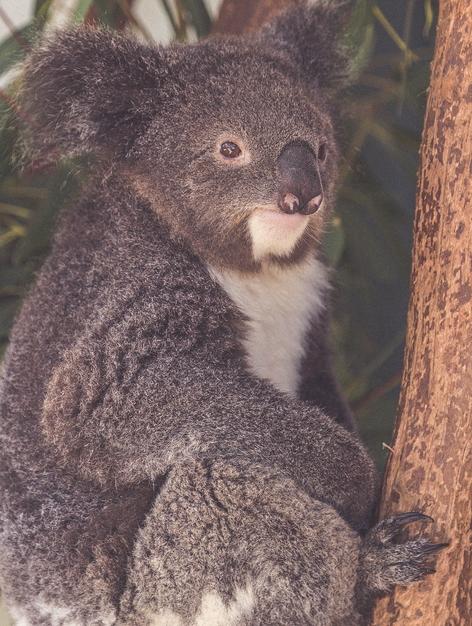 New South Wales-6723 (Kopiowanie)