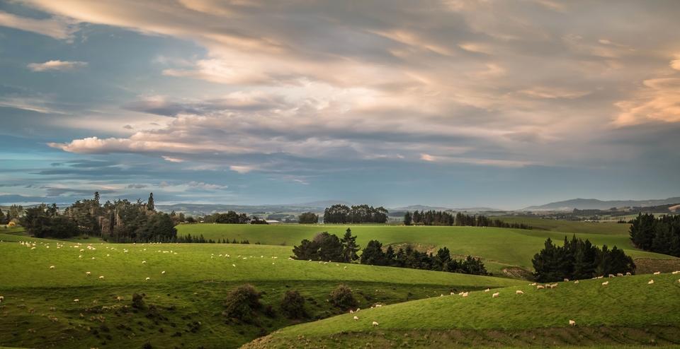 Nowa Zelandia-7714 (Kopiowanie)