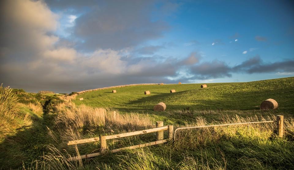 Przyroda w Nowej Zelandii | Milford Sound