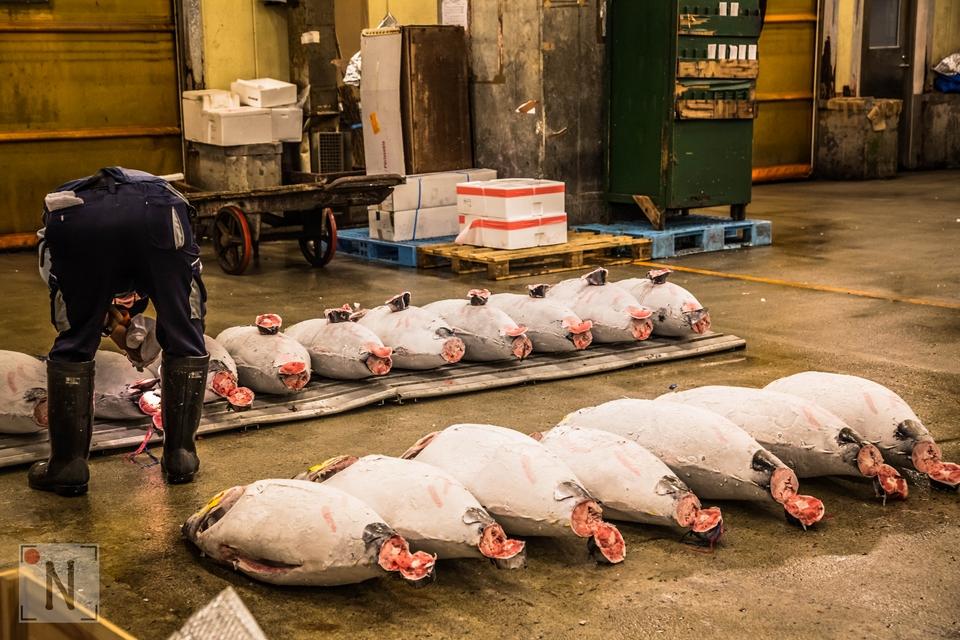 Tsukiji-1329 (Kopiowanie)