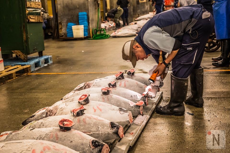 Tsukiji-1333 (Kopiowanie)