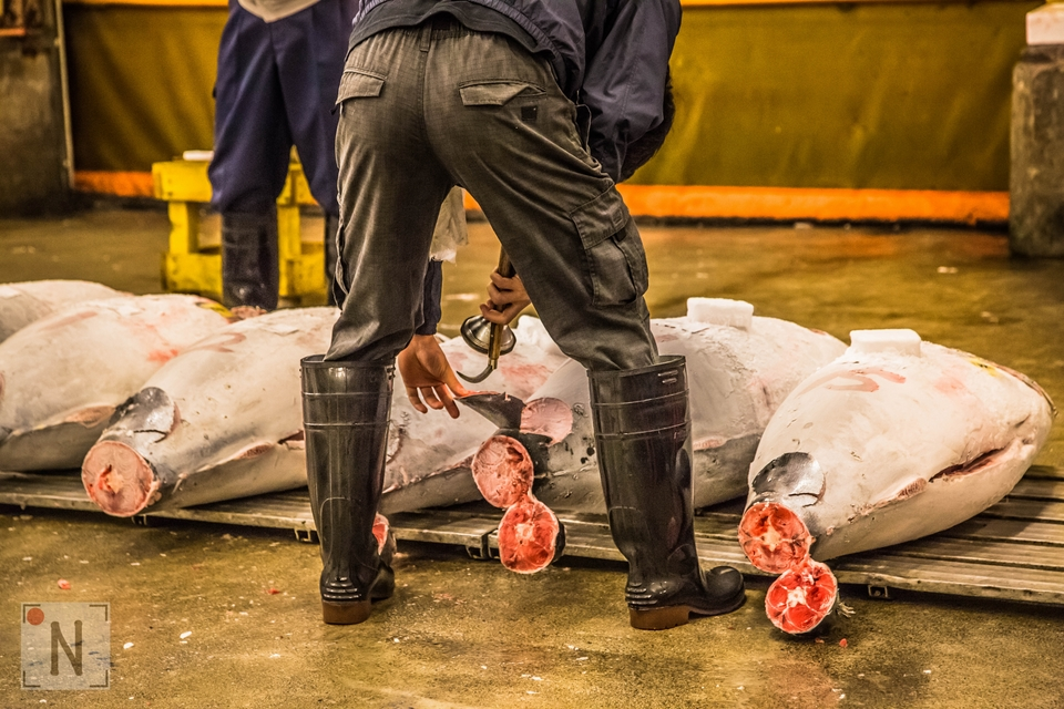Tsukiji market – aukcja tuńczyków