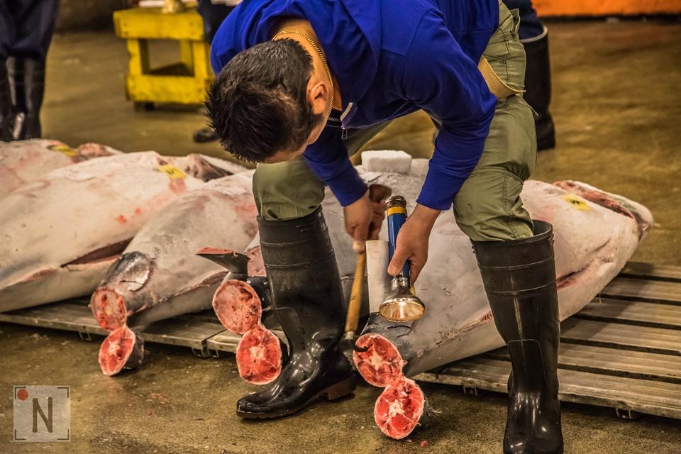 Tsukiji-1429 (Kopiowanie)