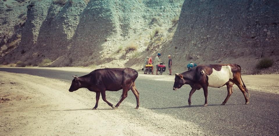 Kierowcy w Kirgistanie – obyście zginęli nim kogoś zabijecie