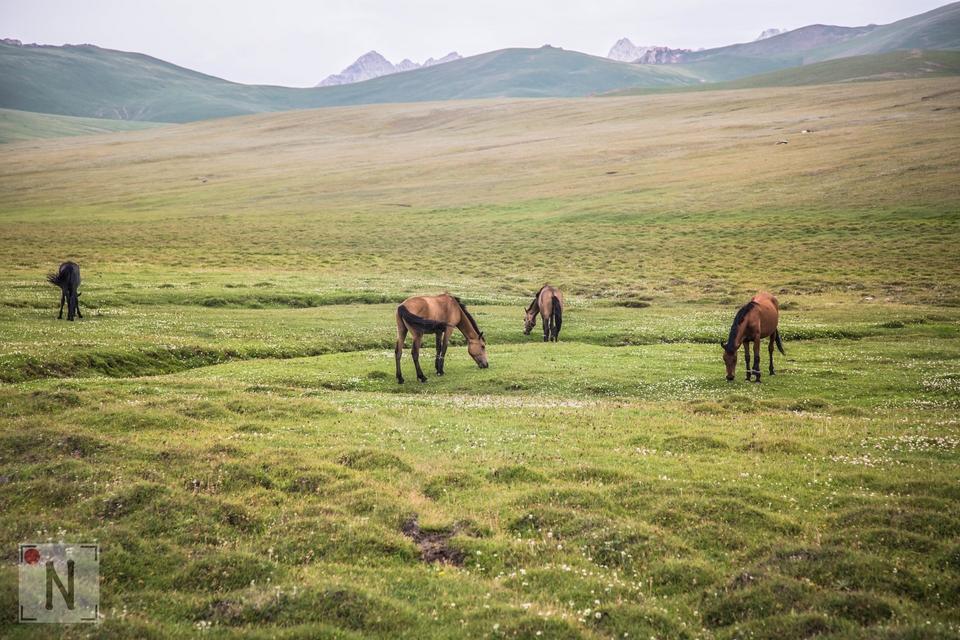 Kirgistan rowerem - Son Kul-4538 36