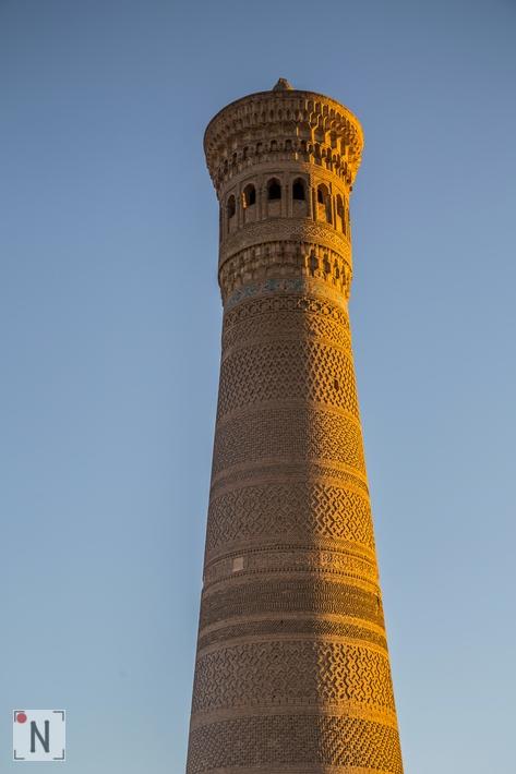 Bukhara-6603 8